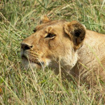 Safari Fotógrafico – Consejos para su Viaje a Kenia o Tanzania