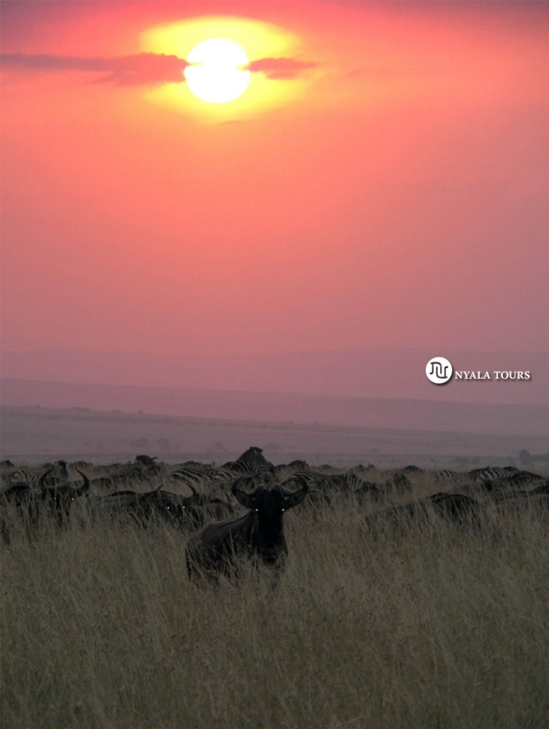 gnus sunset, mara