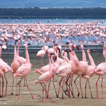 Como es un viaje de nuestros clientes a Kenia