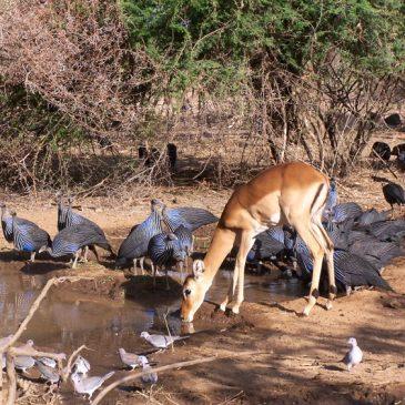 Que ver y hacer en Kenia – 10 mejores lugares