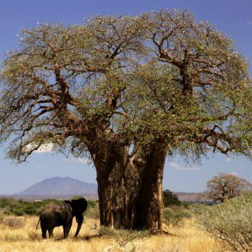Que ver y hacer en Tanzania – 10 mejores lugares