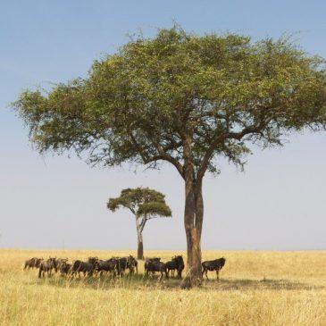 Viajes a Kenia Patrimonio de la Humanidad