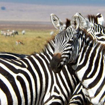 Consejos para hacer un safari en Africa