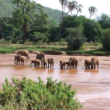 Razones para contratar un safari con una agencia especializada