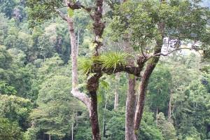 El bosque de Taman Negara