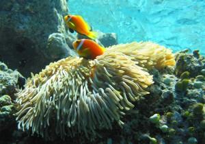 Fondos marinos de Maldivas