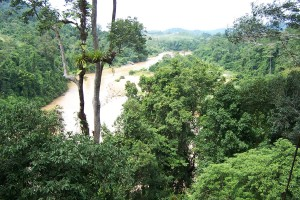 En el bosque del parque nacional de Taman Negara