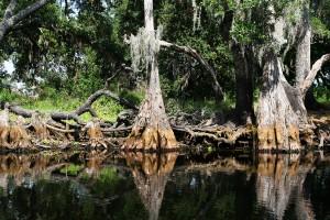 Parque nacional de Everglades (Florida)