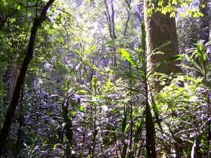 La selva de Kakamega