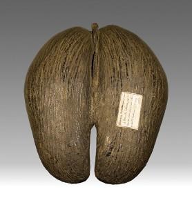 El endémico Coco de mar