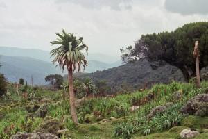 Las tierras altas de Etiopia