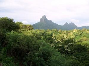 Preciosa Montaña en el interior