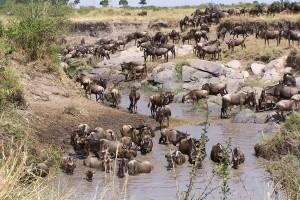 El cruce del río Mara