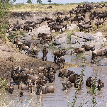 Bonitas Fotos de Kenia