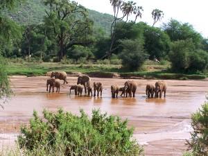 Elefantes en Samburu