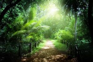 Bosque en la isla Praslin