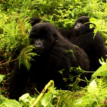 Bonitas Fotos de Uganda
