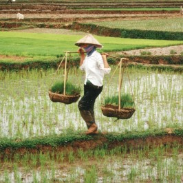 Bonitas fotos de Vietnam