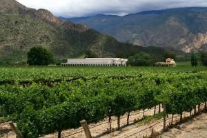 Zona de viñedos de Córdoba