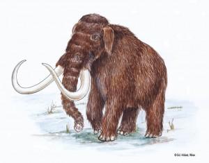 22-2_Mammut