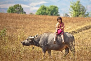 A Girl Riding A Bull To School, Myanmar Copyright Andrey