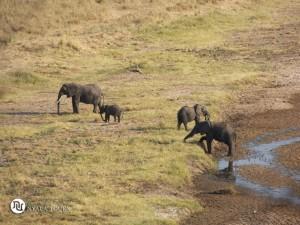 Elephant view1