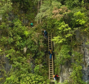 Schoolchildren Climbing On Unsecured Wooden Ladders, Zhang Jiawan Village, Southern China copyright  ImaginachinaRex Features