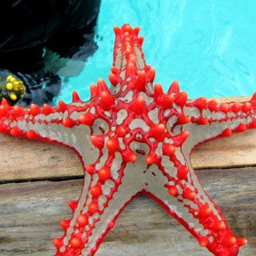 Espectaculares Estrellas de mar en Zanzibar