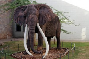 ahmed_the_elephant_sculptur