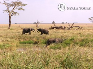 elephants playful good
