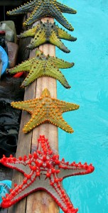 starfish of all colors lined up on dhow
