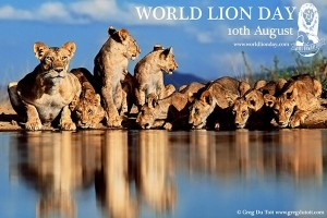 world-lion-day gREG DU TOIT