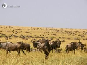 Ñus en Mara signature