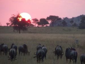 Atardecer en el Serengeti