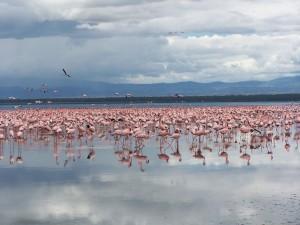 El lago Nakuru