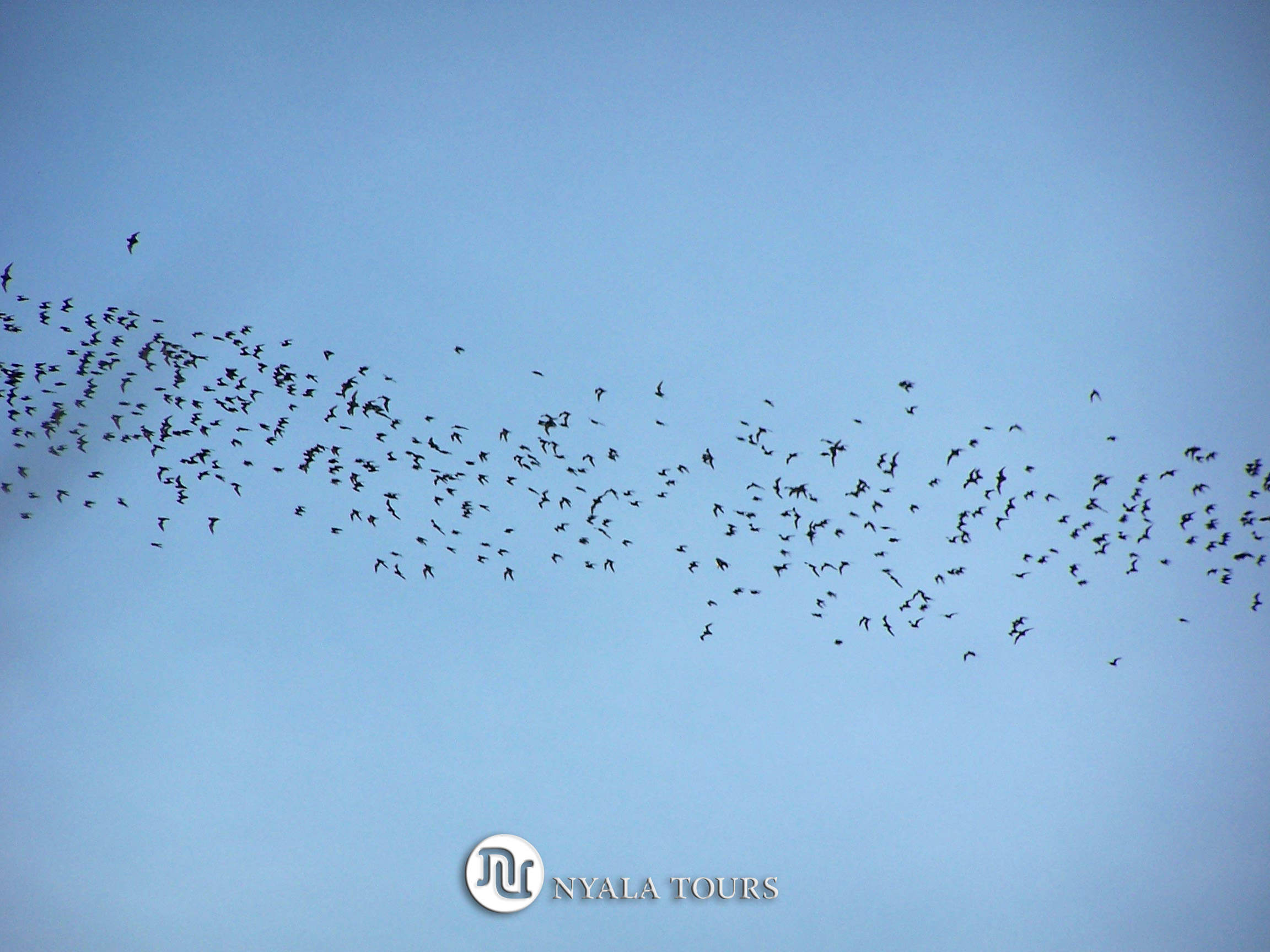 Blue sky bats2