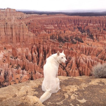 Viajando con lobos en EE.UU  /  Travelling with Wolf in the U.S.A