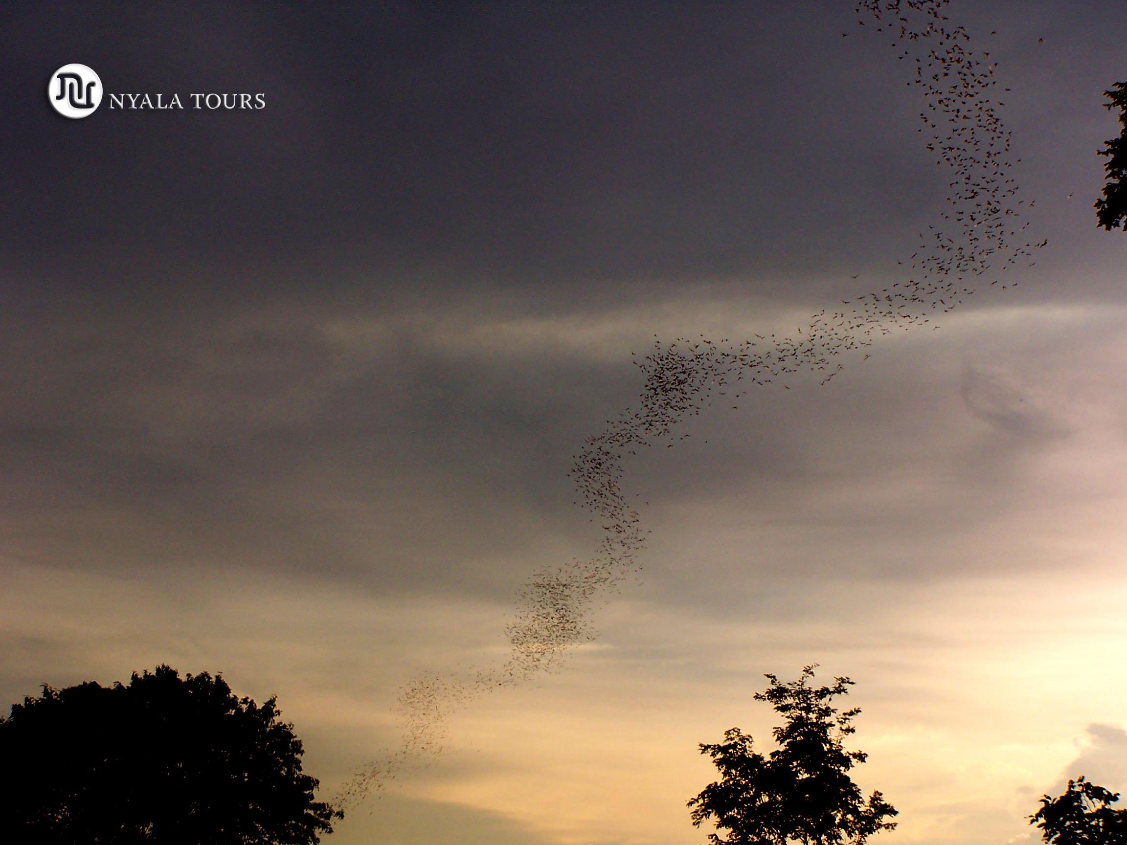 bats sunset sign