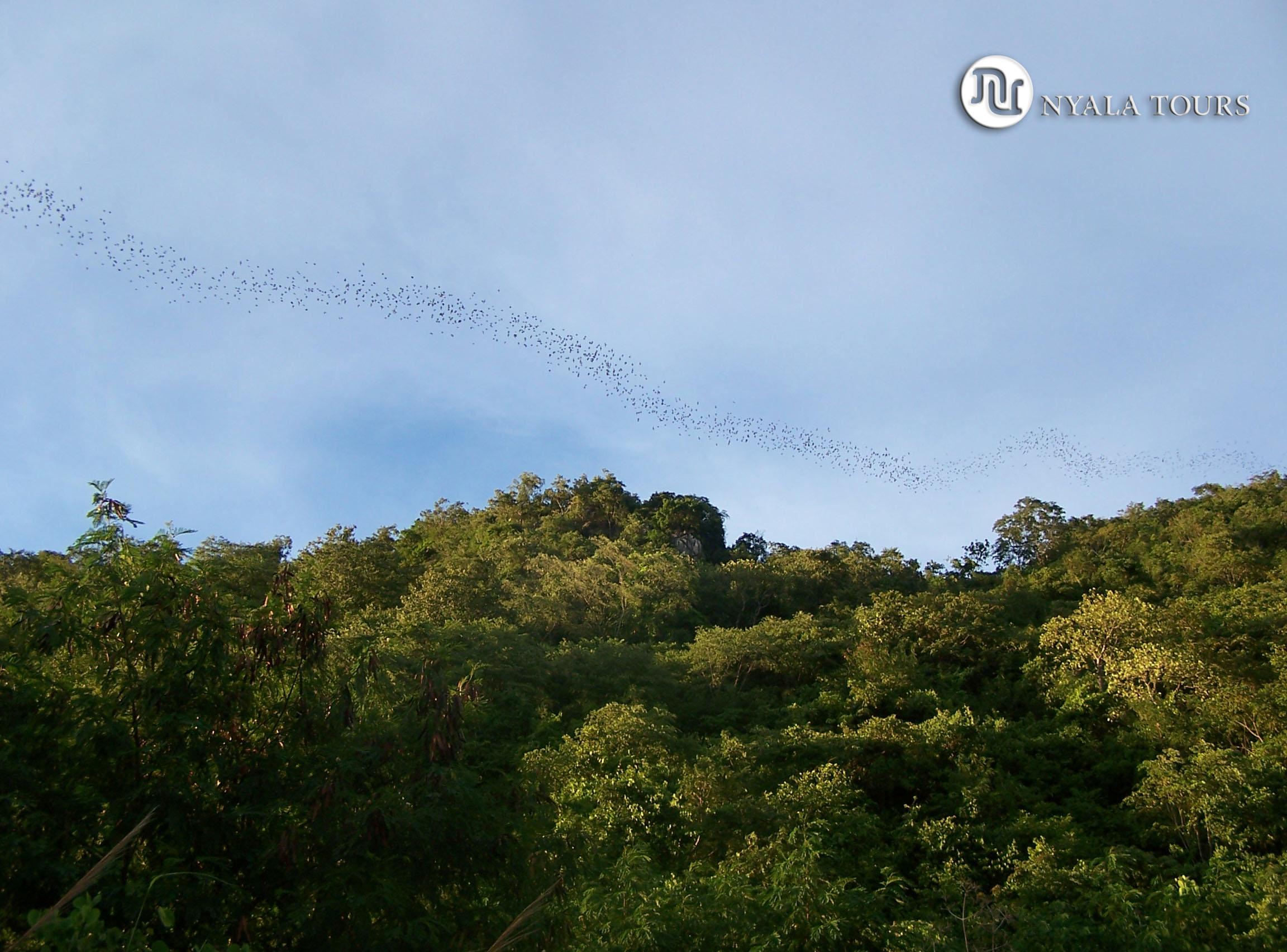 blues sky bats