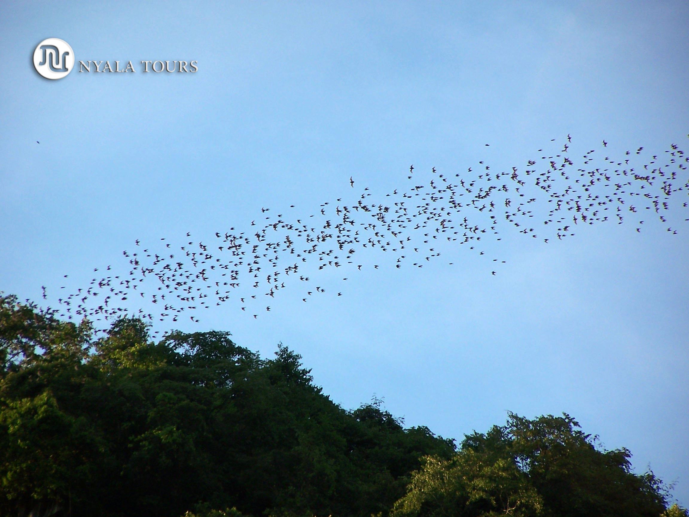 salida murciélagos