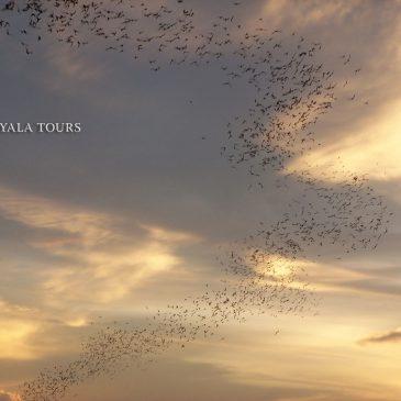 ¡Impresionante!  La salida diaria de 2 millones de murciélagos