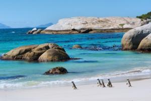 Pinguinos en la costa de la provincia de Ciudad del Cabo