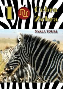 I love zebra Nyala