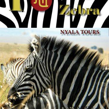 Curiosidades de las Cebras  /  Curiosities of zebras