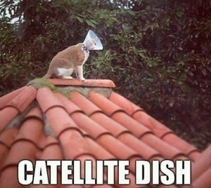 SATELITE CAT DISH