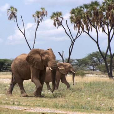 Kenia el mejor destino de safari  /  Kenya awarded world's leading safari destination