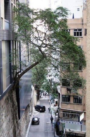 árbol creciendo de un edificio.