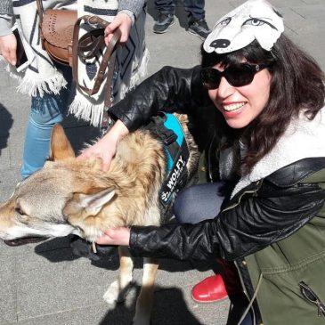 Aullidos por el Lobo en Madrid | Howls for the Wolf in Madrid
