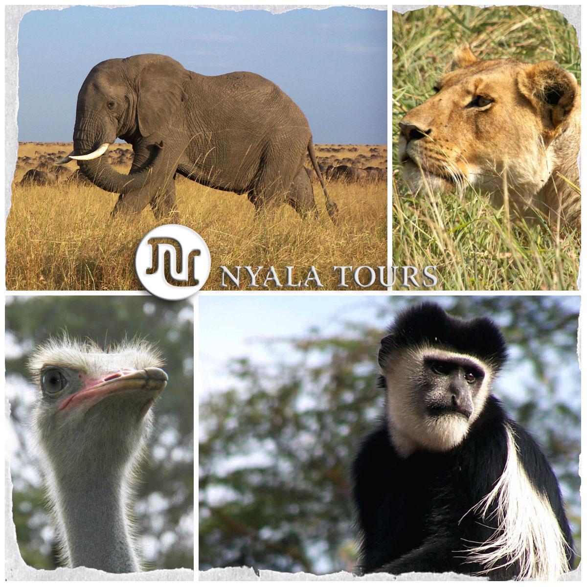 collage animales grande signature