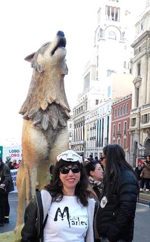 wolf vt